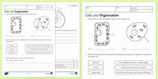 ks3 cells and organization homework worksheet worksheet
