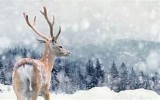 Tiere Im Winter Wie Sie Ihnen Durch Die Kalte Zeit Helfen