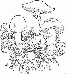 Gratis Malvorlagen Blumen Giftpilz Ausmalbild Malvorlage Blumen