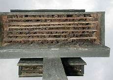 bat conservation international bat house plans how to create batbox google search bat house plans