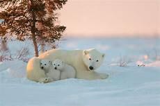 polar backgrounds polar wallpapers picture polar wallpaper