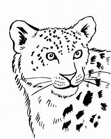 snow leopard coloring page starts for
