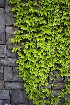 Types Of Climbing Plants