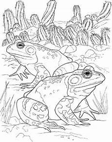 Frosch Malvorlagen Quest Malvorlage Frosch Malvorlagen 15