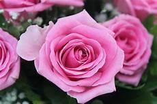 ca fiore foto e immagini di fiori come sfruttarle al meglio per