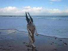 Malvorlagen Unterwasser Tiere Lustig 29 Hundebilder Die Niemals Nicht Lustig Sind Hunde