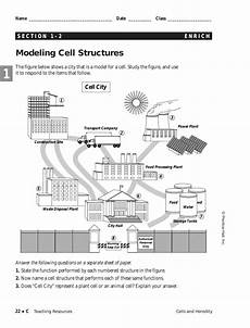 Modeling Cell Structure