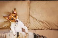 hund fieber messen fieber bei hunden erkennen und behandeln hunde kausnacks