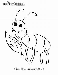 insect coloring page a free nature coloring printable