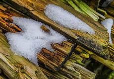 holzwurm im brennholz was tun gegen ungeziefer und