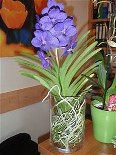 Vanda Im Glas Orchideenforum