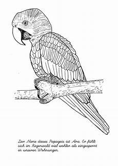 ausmalbilder schwer vogel ausmalbilder ausmalen