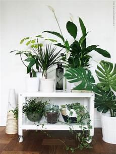 Deco Chambre Interieur Plantes Vertes