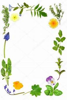 bordure en fleur herb leaf and flower border stock photo 169 marilyna 2055012