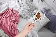 punture da cimici da letto come riconoscere le punture delle cimici da letto