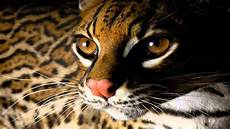beautiful animals cool of animal wallpapers youtube