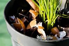 Eierschalen Als Dünger - eierschalen als d 252 nger anwendung wirkung plantura