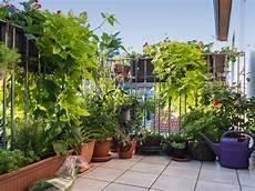 Der Balkon Mit Privatsph 228 Re Sichtschutz Mit Pflanzen