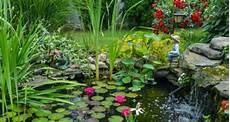 Wasserpflanzen Im Teich Einsetzen Mein Sch 246 Ner Garten