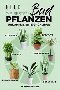 extrem viel staub im zimmer luftverbesserer diese pflanzen sind f 252 r die wohnung einrichtung plantas