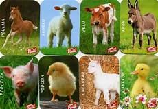 animaux de la ferme fruit 233 b 233 b 233 s animaux de la ferme de magnet