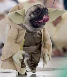Wars Hund - dogs wearing wars costumes wiresmash