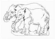 ausmalbilder zum ausdrucken gratis malvorlagen elefant 2