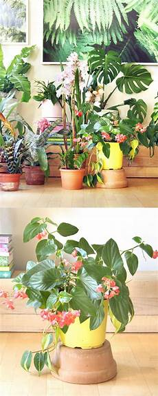 easy indoor flowers most beautiful indoor plants 5 easy care tips a piece of rainbow