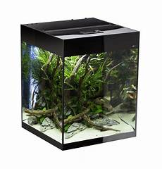 Aquael Glossy Cube 50 Zwart Aquarium Shrimponly