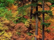 Hutan Alami Fauna Dan Flora