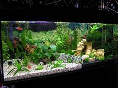 Freshwater Aquarium Aquascape Design Ideas Search