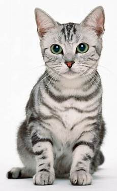 Kasih Sayang Rahasia Penciptaan Kucing