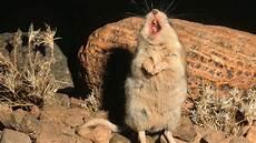 mäuse in der wand was tun m 228 use geschichten quot der schlimmste freund des menschen