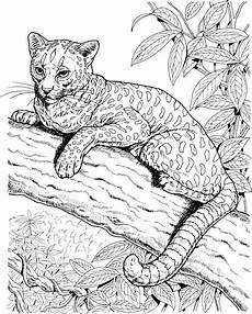jaguar coloring pages to and print for free
