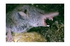 Ratten Bek 228 Mpfen Und Vertreiben Tipps Gegen Ratten Im Haus