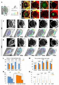 s4dgif the ubiquitin proteasome system is required for cell