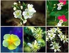 fiori di bach torino metodo bates torino educazione visiva massaggi bars