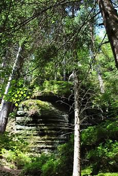 Gambar Pemandangan Pohon Alam Gurun Cabang Menanam