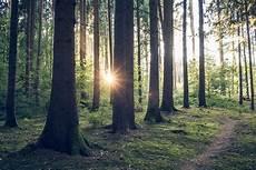 Kumpulan Gambar Pemandangan Alam Hutan Pinus