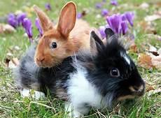 kaninchen vergesellschaften leicht gemacht zooroyal magazin