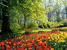 Gambar Gambar Bunga Yang Indah Paling Cantik Dipandang