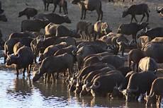 pilanesberg malaria free budget lodge safari 4 day package