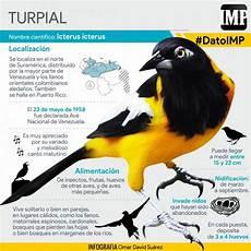 ave nacional de venezuela para dibujar datoimp el turpial el ave nacional de venezuela el impulso