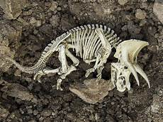 extinction is natural but it s happening at 1 000 times