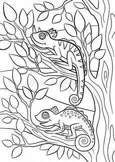 animals coloring pages 16939 coloring pages animals two chameleon stock vector illustration of cheerful