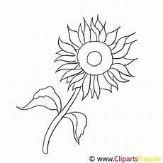 Malvorlagen Sonnenblumen Ausdrucken Sonnenblume Malvorlage Kostenlos