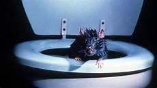tote ratte entsorgen ratten in der toilette w wie wissen ard das erste