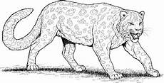 leopard coloring pages to and print for free