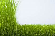Fr 252 Hjahrspflege Rasen Gartenpflege Gartengestaltung