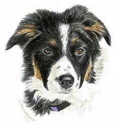 Ausmalbilder Hunde Border Collie Bordercollie07 Bild